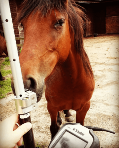 Horse helping surveyors
